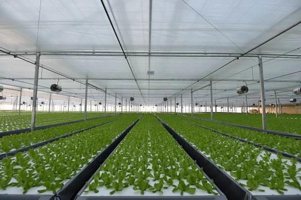 中国最大級の植物工場