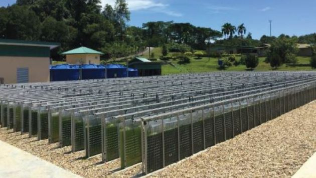 マレーシア・サラワク州に設立した世界最大級の藻類培養設備
