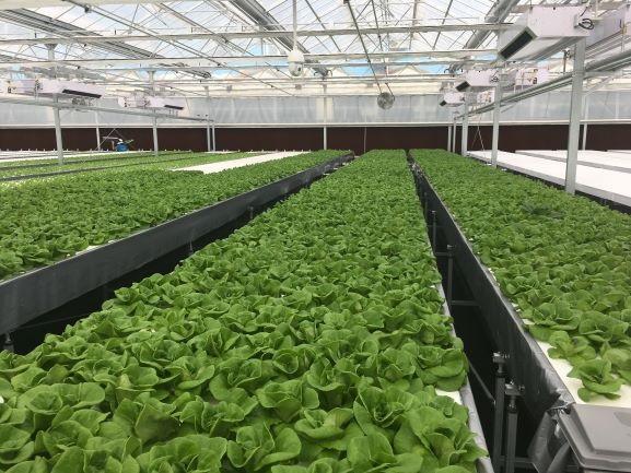 三菱ケミカル 納入した植物工場