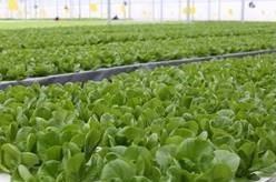 光明食品集団の植物工場