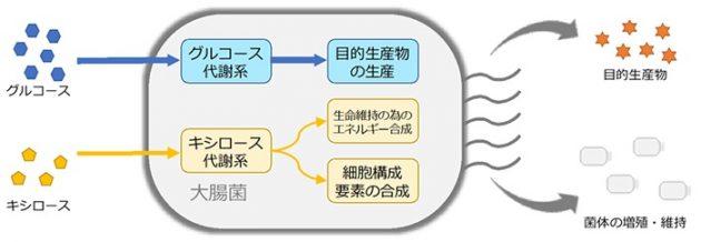 PMPE技術による大腸菌を用いたモノづくりのイメージ図