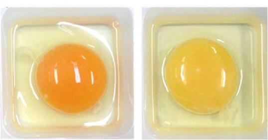 Panaferd-D給餌有無の比較  給餌あり(左)、給餌なし