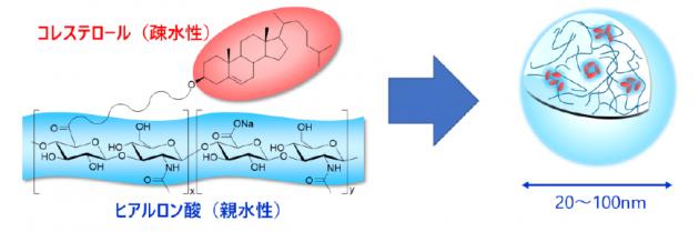 「ヒアルロン酸ナノゲル」の構造