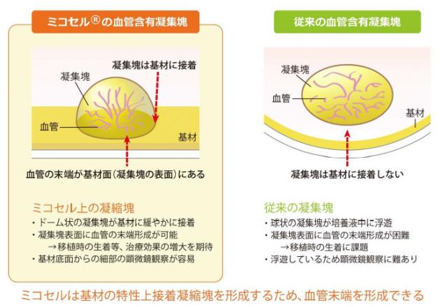「ミコセル」上の血管含有細胞凝集塊の特徴