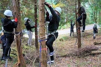 枝打ち作業の様子