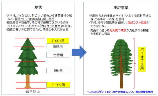 早生樹による木質バイオマス生産